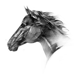 isolated drawn portrait of a horse head side