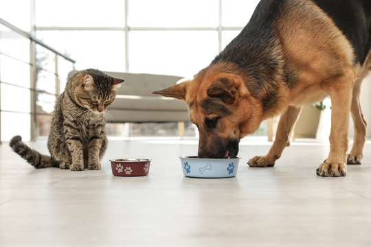 Tabby cat and dog eating from bowl on floor indoors. Funny friends