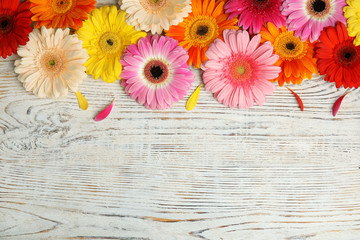 Beautiful bright gerbera flowers on wooden background, top view. Space for text