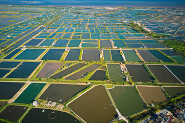 Aerial image of shrimp breeding farms in Giao Thuy, Vietnam