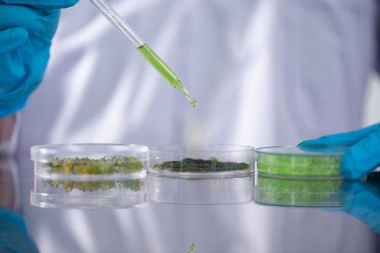 Photobioreactor in lab algae fuel biofuel industry. Algae fuel o