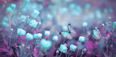 Wall Mural - Wild light blue flowers in field and two fluttering butterfly on nature outdoors, close-up macro. Magic artistic image. Toned in blue and purple tones.