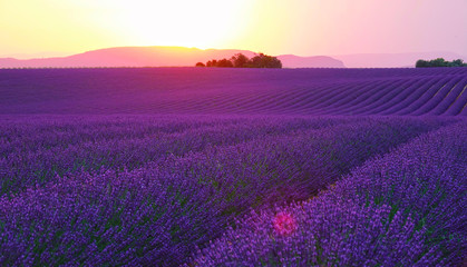 Foto op Aluminium Violet LENS FLARE: Evening sun sets behind the hills and shines on fields of lavender.