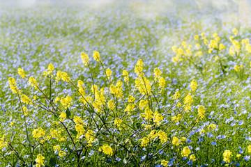 magnifique vhamp de lin en fleur
