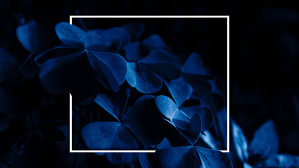 Moonlight on the leaves in the forest, a ray of light in the dark. Blue neon. Nature at night. White frame, poster