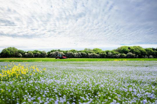 agriculteur travaillant au milieu des champs de lin en fleur
