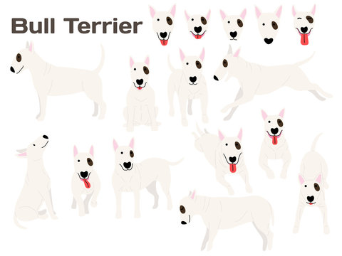bull terrier,dog in action,happy dog