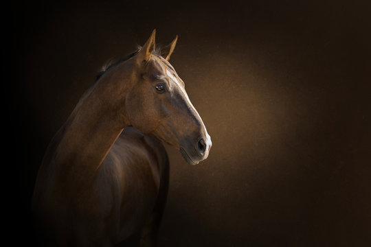 portrait of a  akhal-take horse on the dark background