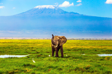 Elephant at Mount Kilimanjaro Wall mural
