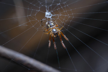 A tiny spider sits in the center of the web. Macro, selective focus