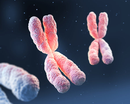 3d rendering of X chromosome Genetic medical background.