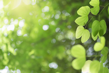 Closeup of nature green leaf and sunlight with greenery blurred background use as decoration ecology environment , fresh wallpaper concept. - Image
