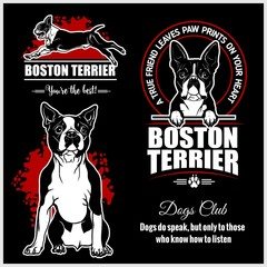 Boston Terrier - vector set for t-shirt, logo and template badges