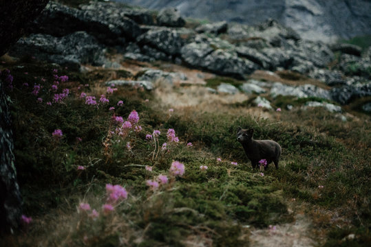 Beautiful fox in natural environment?in mountains