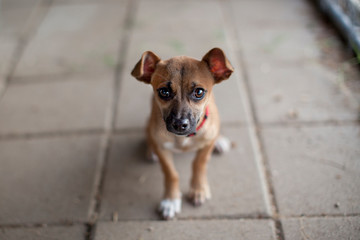 Portrait of young dog looking up at camera