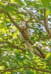 White squirrel perched on a tree branch