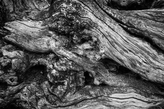 Wood wrinkles