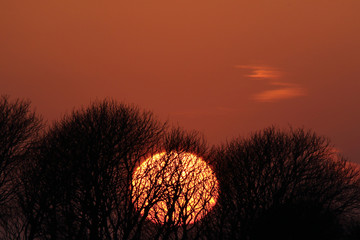Sunset behind trees, close up with telelens