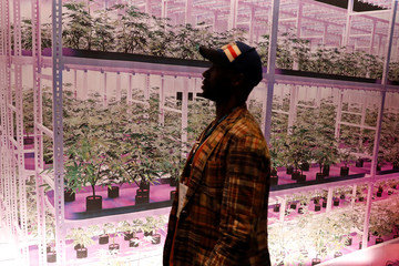 A man walks past a mural of growing marijuana plants at The Cannabis World Congress & Business Exposition (CWCBExpo) trade show in New York