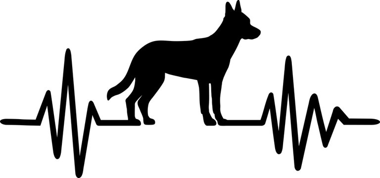 Malinois frequency silhouette