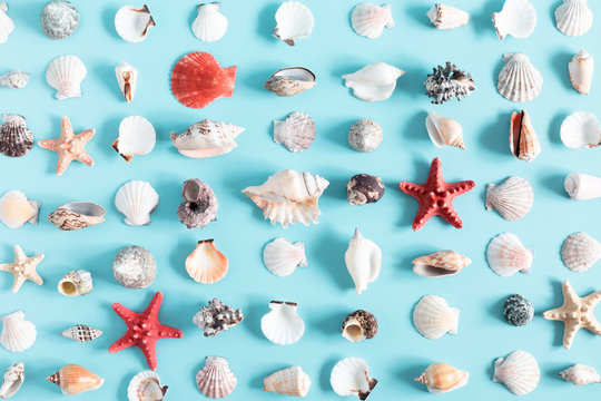 Sea beach composition. Starfish, seashell on pastel blue background. Summer concept. Flat lay, top view, copy space