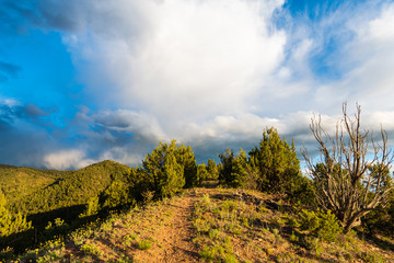 A hiking trail in the dramatic evening light of golden hour through a juniper and high hills under a beautiful sky with storm clouds - Sangre de Cristo Mountains near Santa Fe, New Mexico