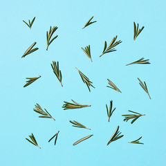sprigs of rosemary isolated on a blue background