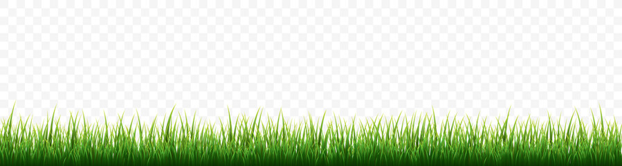 Green grass border set on white background. Vector Illustration Wall mural