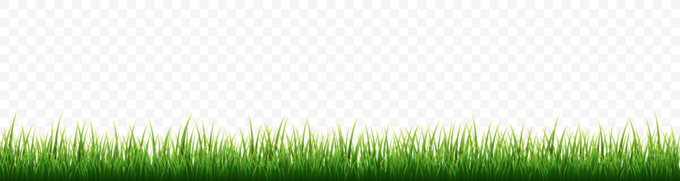 Green grass border set on white background. Vector Illustration