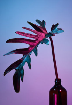 Close up of leaf in neon light