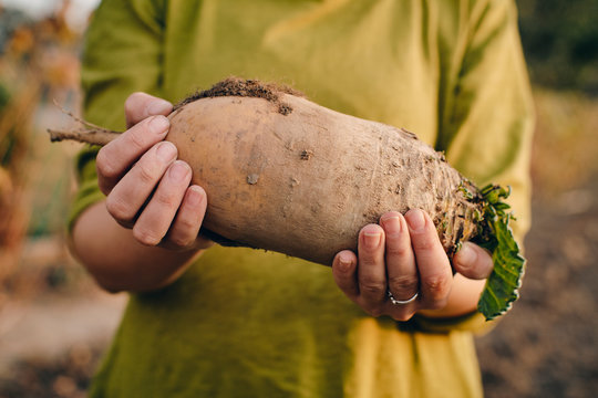 Young woman with sugar beet in her hands