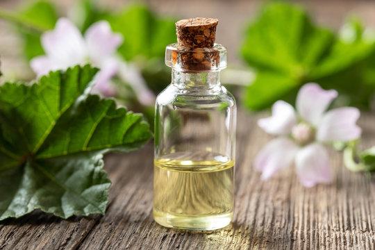 A bottle of mallow essential oil with fresh malva neglecta plant