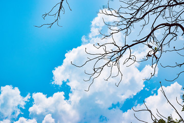 Tree branch without leaves on fresh sky