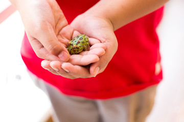 Boy holds in a hand green frog