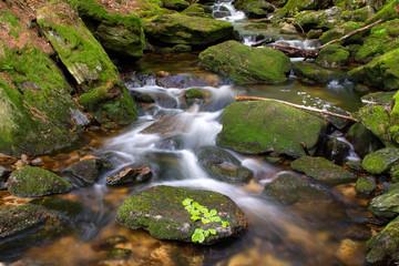 Bayerischer Wald, Sagwasser, Bach im Wald, Deutschland