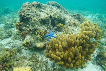 Beautiful coral reefs, diving, underwater photography