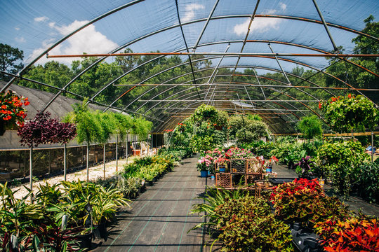 Outdoor Greenhouse Full of Colorful Plants