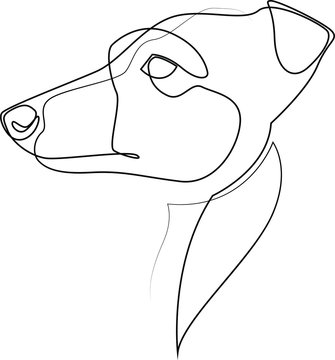 Continuous line Whippet. Single line minimal style English Whippet or Snap dog vector illustration. Portrait