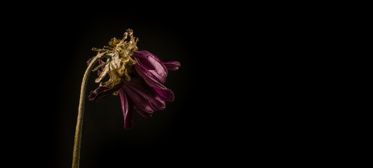 Flowers withered