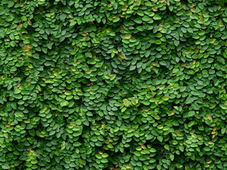 green ivy plant cover on the wall Wall mural