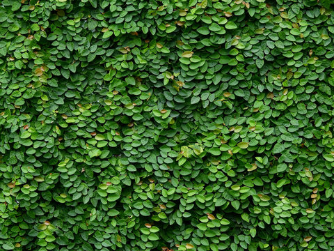 green ivy plant cover on the wall