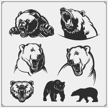 Grizzly bear, polar bear, brown bear silhouettes and illustrations. Labels, emblems and design elements for sport club with bears. Print design for t-shirts.