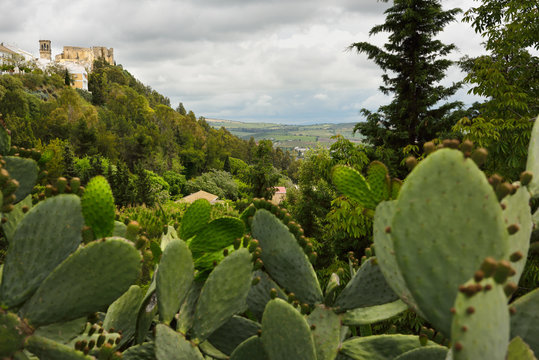 Saint Mary church tower and castle on the clifftop at Arcos de la Frontera Spain with prickly pear cactus