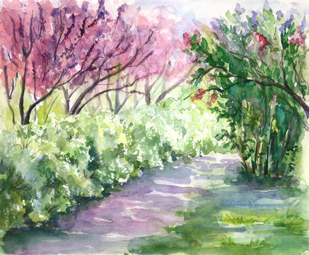 Blooming Cercis trees. Spring park.Hand drawn watercolor illustration