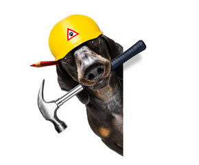 handyman worker hammer dog with helmet