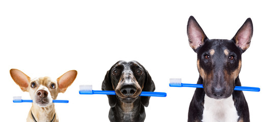 Fotorolgordijn Crazy dog dental toothbrush row of dogs