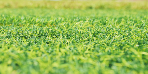 Mid horizontal line focus of artifact grass field. This picture is wallpaper, background.