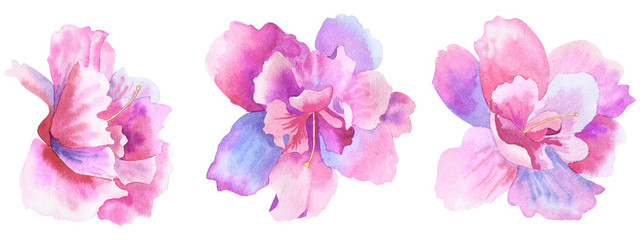 Beautiful purple pink flowers. Floral set. Hand drawn watercolor illustration. Isolated on white background.
