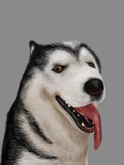 Siberian the dog