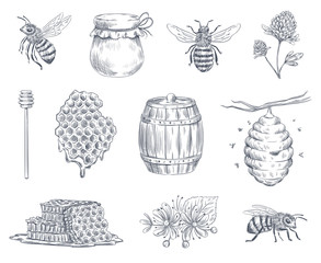 Obraz Bee engraving. Honey bees, beekeeping farm and honeyed honeycomb vintage hand drawn vector illustration set - fototapety do salonu